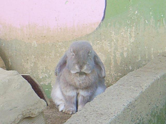 ウサギのちりめん人形