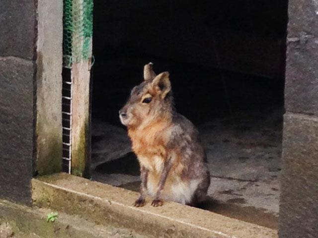 ウサギのブックカバー